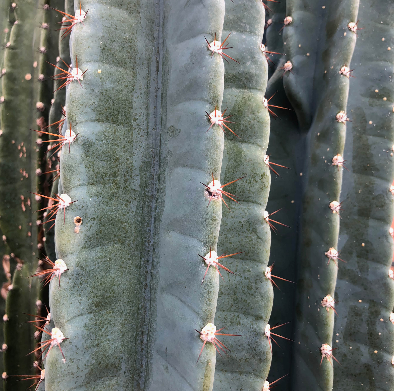 Hortus Amsterdam cactus